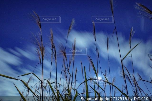 植物のクローズアップの写真・画像素材[2717516]