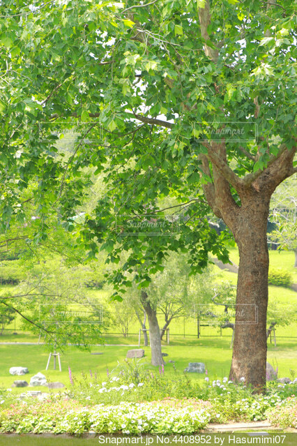 公園の大きな木の写真・画像素材[4408952]