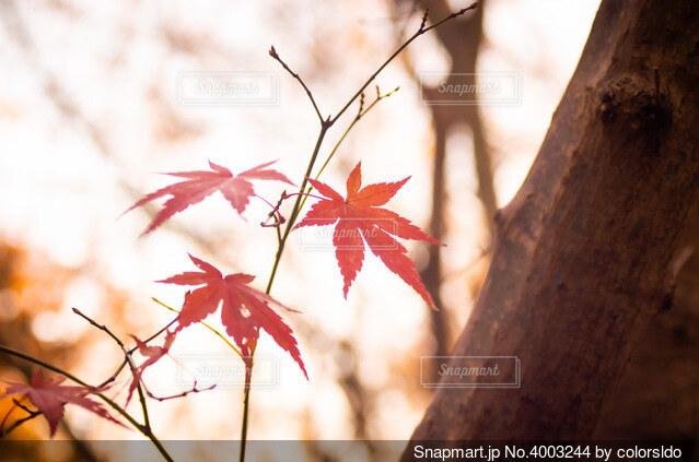 残り秋の写真・画像素材[4003244]