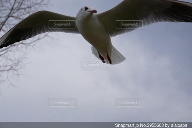 飛んでる鳥の写真・画像素材[3955603]