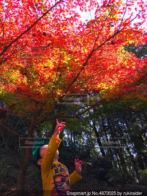 綺麗な紅葉と純粋な心の写真・画像素材[4873025]