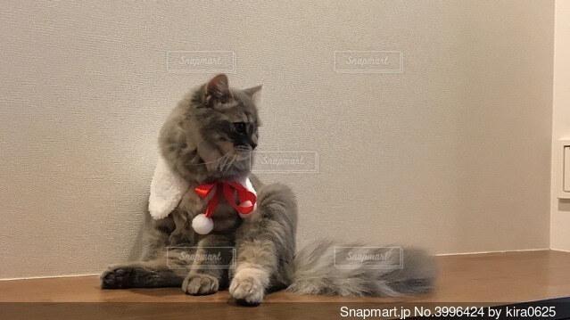 お座り猫の写真・画像素材[3996424]