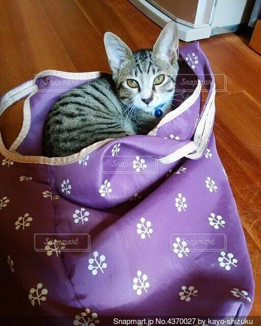 エコバッグと子猫の写真・画像素材[4370027]