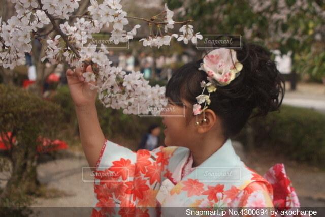 桜を愛でる着物の少女の写真・画像素材[4300894]