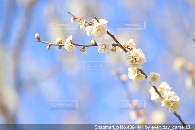 花のクローズアップの写真・画像素材[4384441]
