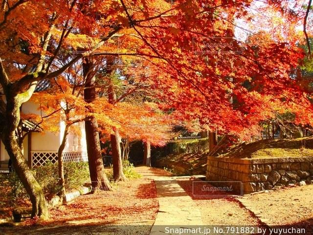 近くの木のアップの写真・画像素材[791882]