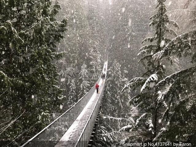 雪の中の吊り橋の写真・画像素材[4137641]