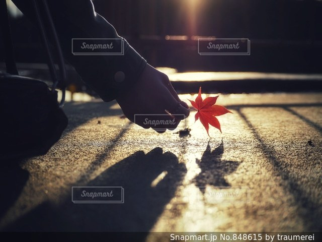 赤と白の傘の写真・画像素材[848615]