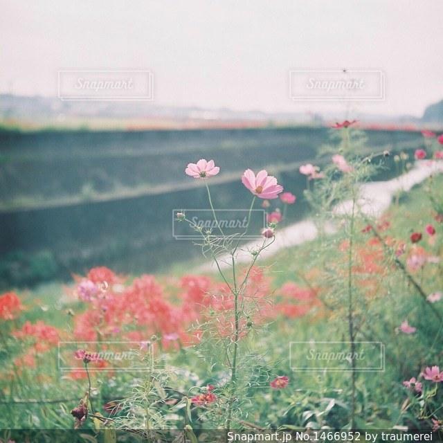 近くのフラワー ガーデンの写真・画像素材[1466952]
