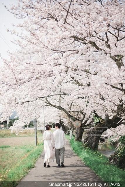 桜並木の写真・画像素材[4261511]