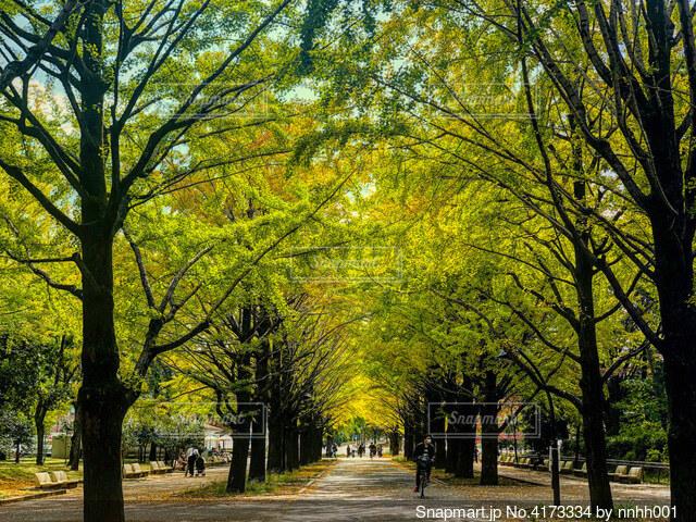 秋の公園の写真・画像素材[4173334]