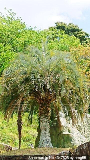 木の隣にあるヤシの木の群の写真・画像素材[4347805]