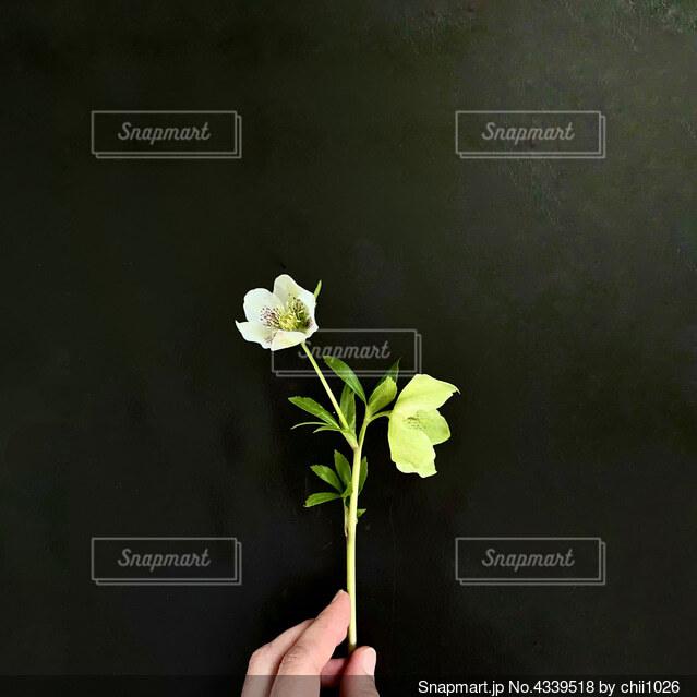花で満たされた花瓶の写真・画像素材[4339518]