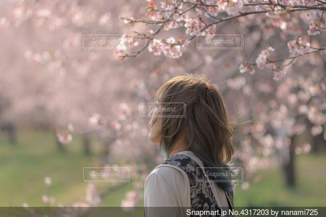 桜と女の子の写真・画像素材[4317203]