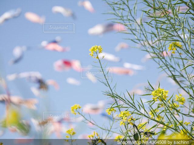 花のクローズアップの写真・画像素材[4364508]