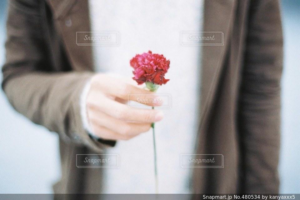 花の写真・画像素材[480534]