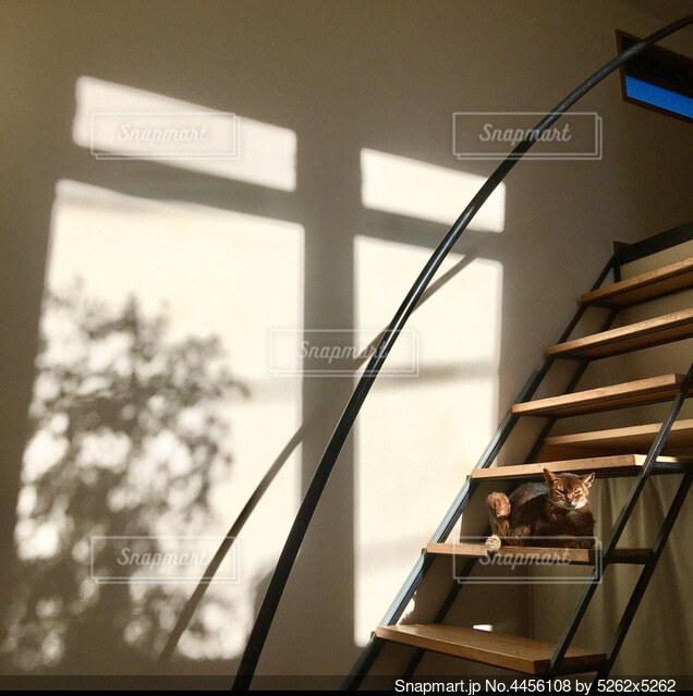 冬の日の猫の写真・画像素材[4456108]