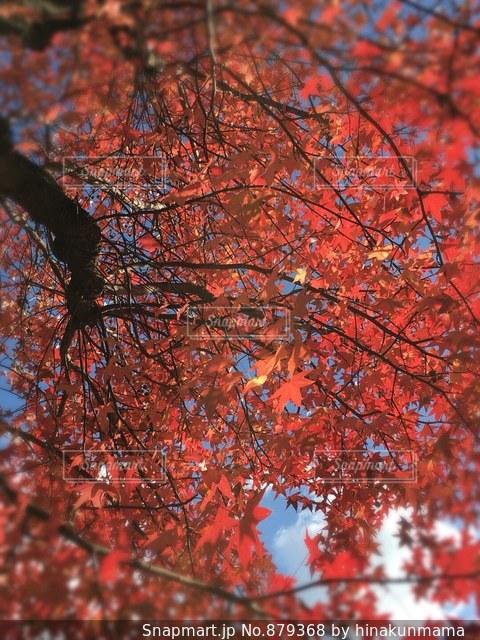 ♡ 秋色の空 ♡の写真・画像素材[879368]