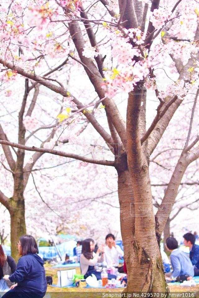 花の写真・画像素材[429570]