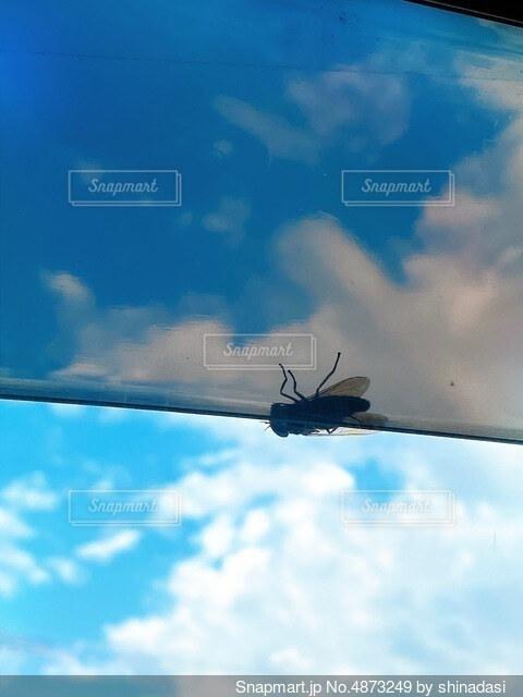 青空と虫の写真・画像素材[4873249]