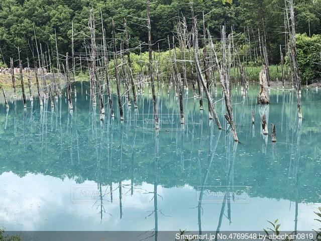 青い池の写真・画像素材[4769548]