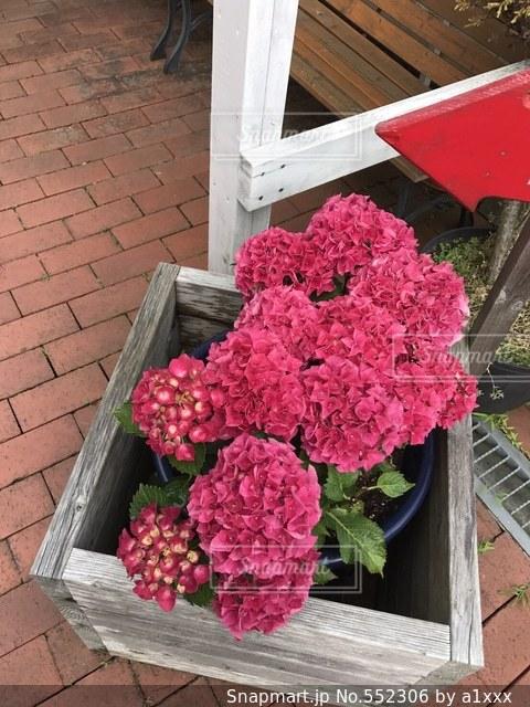 花の写真・画像素材[552306]