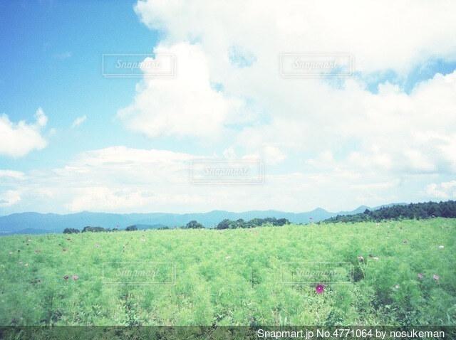 広大な草原の写真・画像素材[4771064]