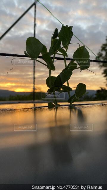 水の体の隣に花の花瓶の写真・画像素材[4770531]
