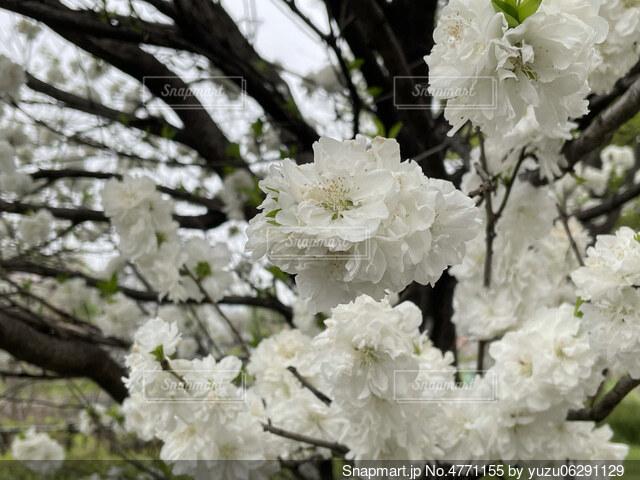 花のクローズアップの写真・画像素材[4771155]