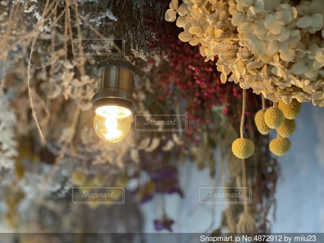 花のクローズアップの写真・画像素材[4872912]