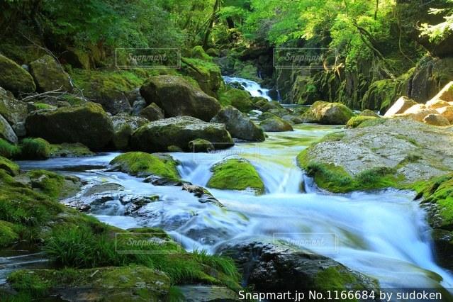 熊本、菊池渓谷の新緑です★の写真・画像素材[1166684]