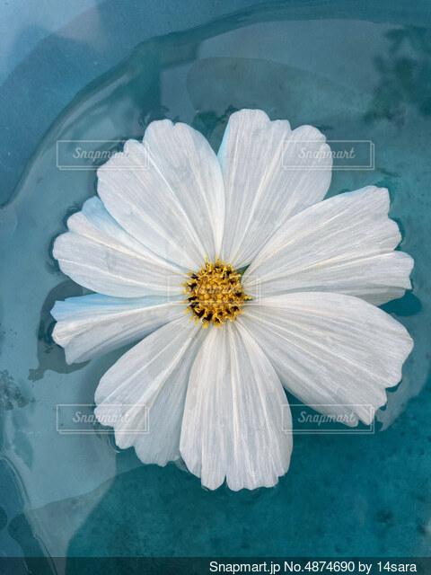 花のクローズアップの写真・画像素材[4874690]