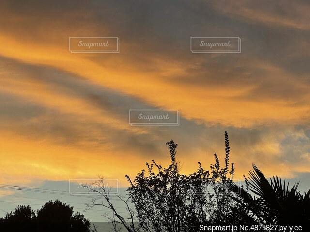背景に夕日のある木の写真・画像素材[4875827]