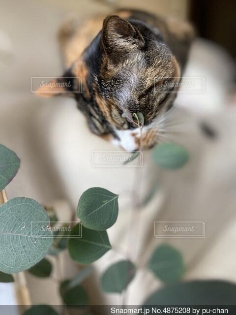 ユーカリと猫の写真・画像素材[4875208]