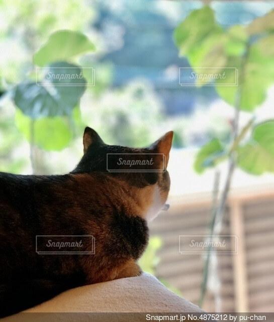 外のウンベラータを見つめる猫の写真・画像素材[4875212]
