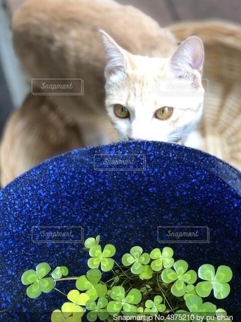 猫とビオトープの写真・画像素材[4875210]