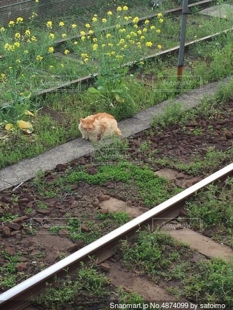 線路でくつろぐ猫の写真・画像素材[4874099]