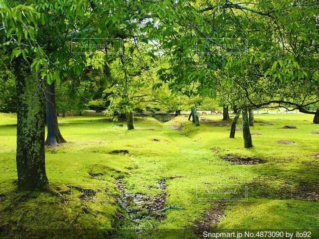新緑の写真・画像素材[4873090]