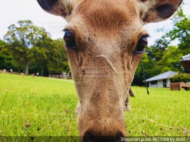鹿のアップの写真・画像素材[4873088]