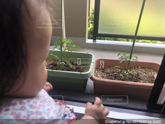 家庭菜園と共に成長の写真・画像素材[4874560]