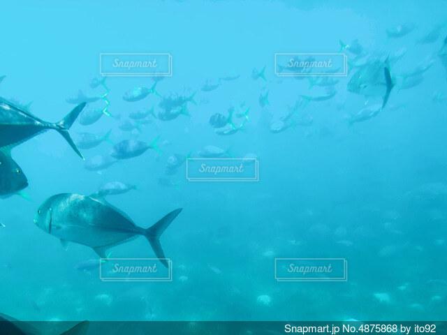 海中の景色の写真・画像素材[4875868]