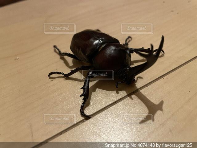 地面に昆虫の写真・画像素材[4874148]