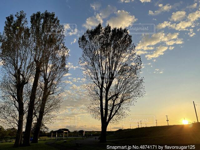 2本の大きな木の写真・画像素材[4874171]