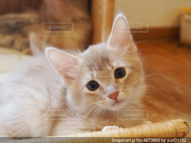 子猫の写真・画像素材[4873993]