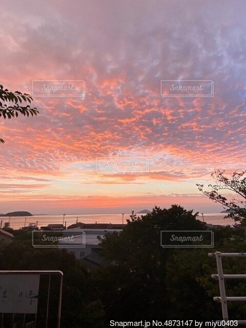 夕日の前の木の写真・画像素材[4873147]