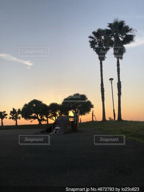 ヤシの木と夕暮れの写真・画像素材[4872783]