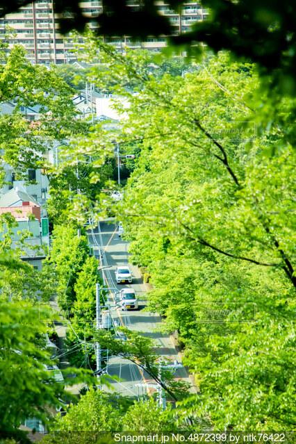 初夏、新緑、爽やかな風の写真・画像素材[4872399]