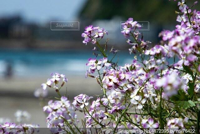 海辺に咲くの写真・画像素材[4872395]