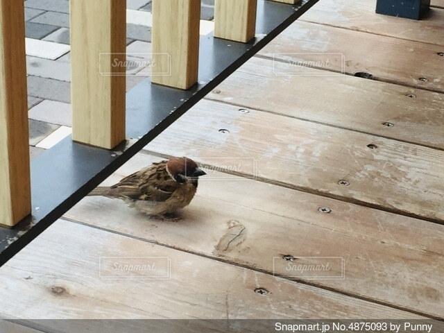 木の床の上に座っている鳥の写真・画像素材[4875093]