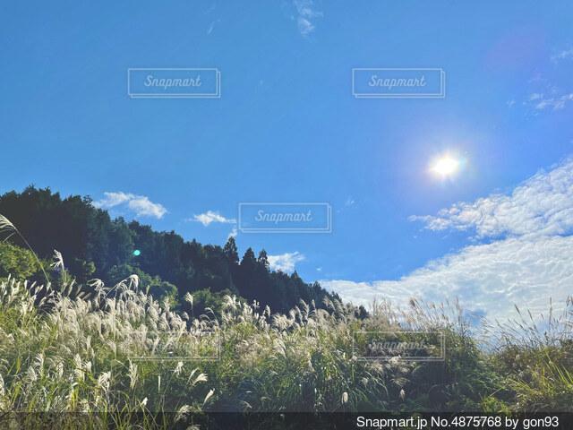 ススキのある秋の空の写真・画像素材[4875768]